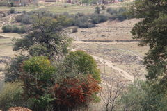 南非洲横向madikwe的自然储备 库存图片
