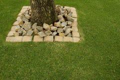 南非洲的干燥台地高原与岩石的刺树 免版税库存图片