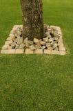 南非洲的干燥台地高原刺树 免版税库存图片