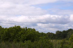 南非洲kruger的国家公园 免版税库存照片
