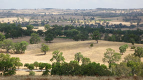 南autralian的横向 库存图片