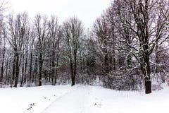 南Czechia的冬天森林在捷克克鲁姆洛夫附近 库存图片