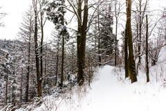 南Czechia的冬天森林在捷克克鲁姆洛夫附近 免版税库存图片