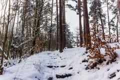 南Czechia的冬天森林在捷克克鲁姆洛夫附近 免版税图库摄影