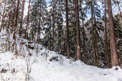 南Czechia的冬天森林在捷克克鲁姆洛夫附近 库存照片