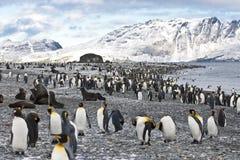 南Geogia的企鹅国王、山和海洋 免版税库存图片