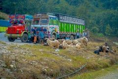 博克拉,尼泊尔, 2017年9月04日:山羊群,去沿街道,当有些卡车停放在街道  免版税库存照片