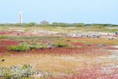 博内尔岛南侧 免版税库存图片