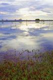博内尔岛湖 库存图片