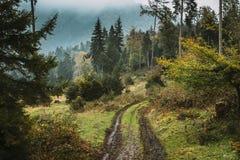 博尔若米,乔治亚 山路道路方式车道在森林里在秋天 图库摄影