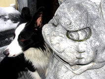 博德牧羊犬在中国镇 免版税库存照片