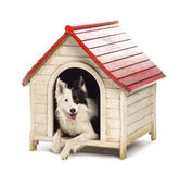 博德牧羊犬在狗窝 免版税图库摄影