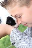 博德牧羊犬小狗 库存图片