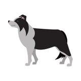 博德牧羊犬设计 库存图片