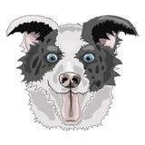 博德牧羊犬面孔向量图形 库存例证