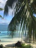 博拉博拉岛棕榈树 图库摄影
