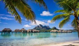 博拉博拉岛由棕榈树构筑了 免版税库存照片