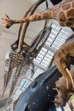 博物馆的动物界 免版税库存照片