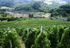 博若莱红葡萄酒 库存照片