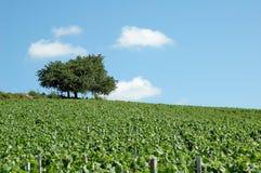 博若莱红葡萄酒lanscape 库存照片