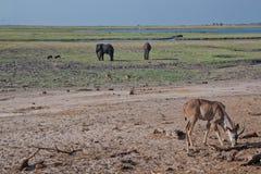 博茨瓦纳大草原场面 库存图片