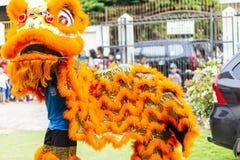 占碑省,印度尼西亚- 2017年1月28日:做杂技的舞狮庆祝农历新年 免版税库存照片
