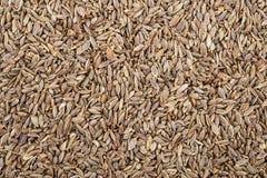 占领整个pictur的Kummel种子 免版税库存图片