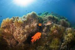 卡塔利娜礁石 库存照片
