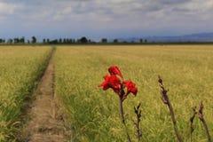 卡塔龙尼亚,西班牙自然和风景 欧洲旅行 旅行癖 免版税库存图片