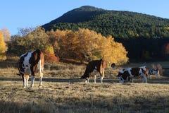 卡塔龙尼亚,西班牙自然和风景 欧洲旅行 旅行癖 库存照片