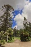 卡塞尔塔宫殿皇家庭院,意大利褶皱藻属 库存图片