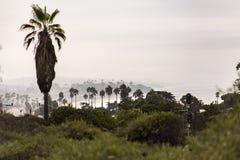 卡尔斯巴德棕榈树 库存图片