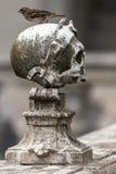 卡尔特教团修士的中世纪公墓 图库摄影