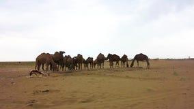 卡山Maranjab盐沙漠 股票视频