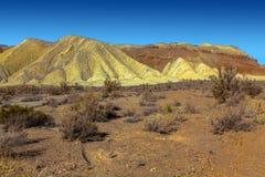 卡扎克斯坦 在全国自然公园Altyn-Emel的山的背景的Saksaul 免版税库存照片