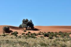 卡拉哈里农厂场面,纳米比亚 免版税库存照片