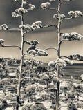 卡拉布里亚,意大利的树和海 库存图片
