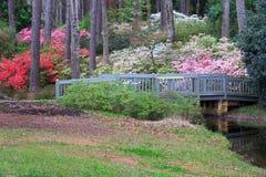 卡拉维庭院杜娟花俯视杉木山乔治亚 库存图片