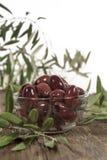 卡拉迈橄榄叶子 免版税库存照片