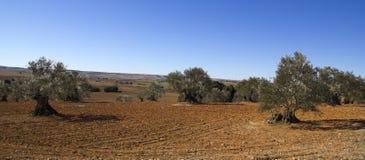 卡斯提尔横向,西班牙。 免版税库存图片