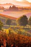 卡斯泰尔韦特罗迪莫德纳,葡萄园在秋天 库存图片