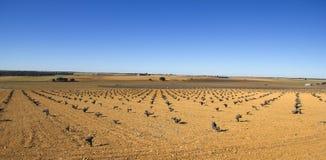 卡斯蒂利亚la的Mancha,西班牙葡萄园。 免版税库存图片