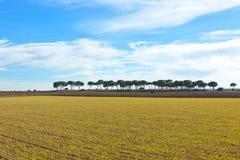 卡斯蒂利亚la mancha西班牙冬天 库存图片