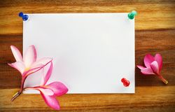 卡片设计,赤素馨花(羽毛) 免版税库存照片