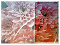 卡片-在框架的温暖的菊花 免版税库存图片