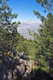从卡瓦洛Morto森林看的Monte Cinto峰顶在可西嘉岛 库存照片