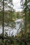 卡累利阿人的森林、河和一点瀑布与多云天空 免版税库存图片