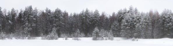 卡累利阿人的横向冬天木头 免版税图库摄影