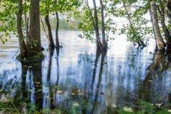 卡累利阿人的沼泽早晨,草,树在水,湖中 库存图片