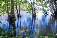 卡累利阿人的沼泽早晨,草,树在水,湖2 po中 免版税库存照片